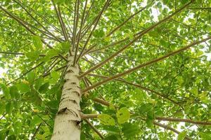 exuberante árbol verde foto