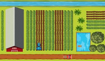 Top view of farmland with crops