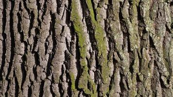 Close-up of tree bark photo