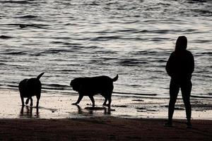 Walking dogs on the beach photo