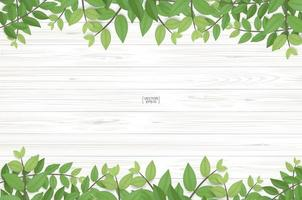 Wood texture with green leaf top and bottom border vector