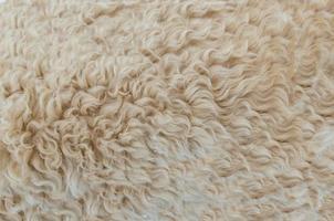 Beige sheep fur
