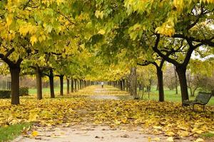 Pathway under a roof of yellow and green leaves photo