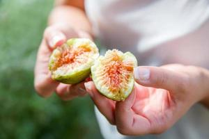 Divided fresh organic figs from the tree photo
