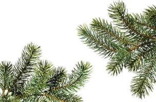 Two fir tree branches on a white background
