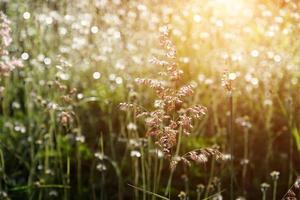 flower grass and sun light.