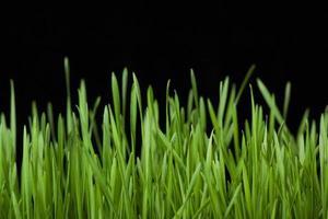 green grass on black