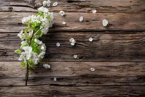 Spring blossoms background photo