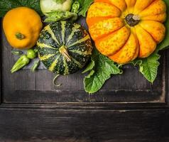 colorful pumpkin with  leaves on dark background, top view