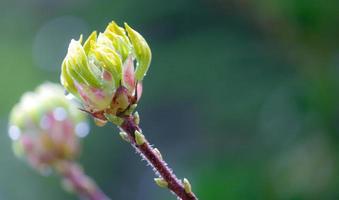 Frühlingserwachen photo