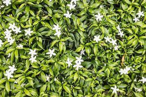 white little flowers background photo