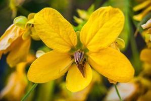 photo of yellow Acacia dealbata branches,soft focus