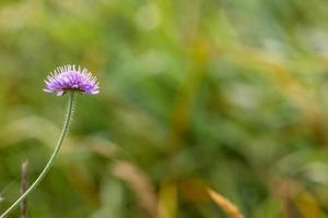 Clover flower on green background photo