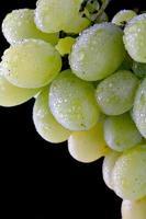 uvas frescas con gotas foto