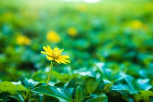 Spring nature background with beautiful yellow flowers