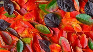 backround made of autumn leaves photo