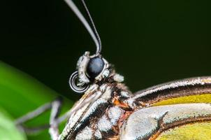 Up Close Portrait of a Butterfly photo