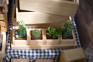 Potted cactus in a wooden crate photo