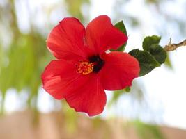 Red Flower with Green Sheets
