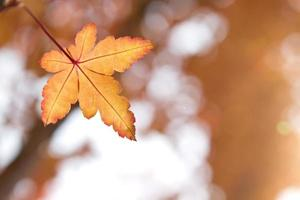 hojas de naranja otoñal
