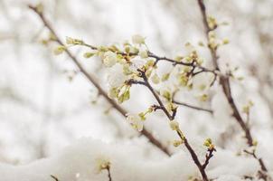 árboles de nieve en primavera