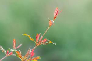 Spring gentle leaves, buds and branches macro background