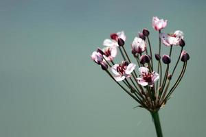 one flower on blurred background