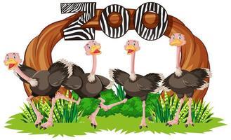 avestruz delante de la pancarta del zoológico