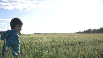 niño corre en un campo de trigo en cámara lenta