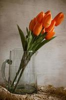 Orage tulip flower photo