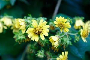 yellow flower closeup photo