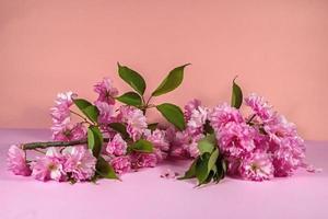 Pink sakura photo