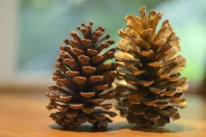 Cone of crimean pine photo