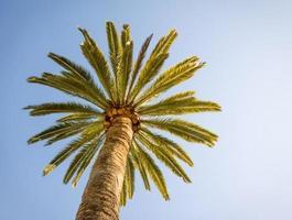 hermosa palmera con cielo azul soleado