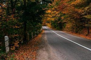estrada de outono