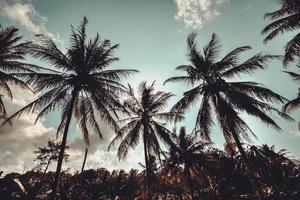 Vintage palm trees at tropical coast
