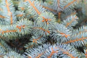 fondo del árbol de navidad.