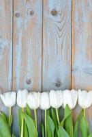 tulipas brancas em fila com um espaço vazio na madeira velha