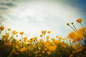 Buttercup Frame photo