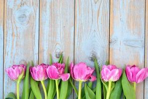 Row of pink tulips on old wood with empty space photo