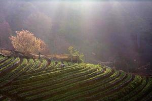 granja de la mañana