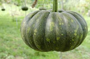 Organic Farm photo