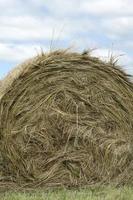 Farm Straw