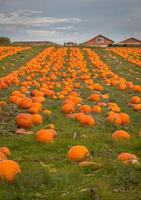 organic pumpkin farm photo