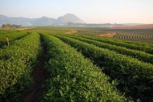 Boon Rawd Farm photo