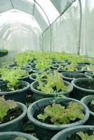 salad vegetable farm