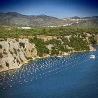 Croatia mussels farm
