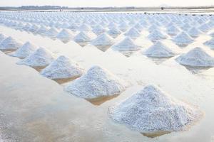 harvesting salt farm