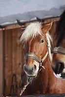 caballo en una granja foto