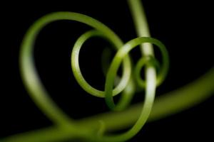 Abstract vine green line texture background photo